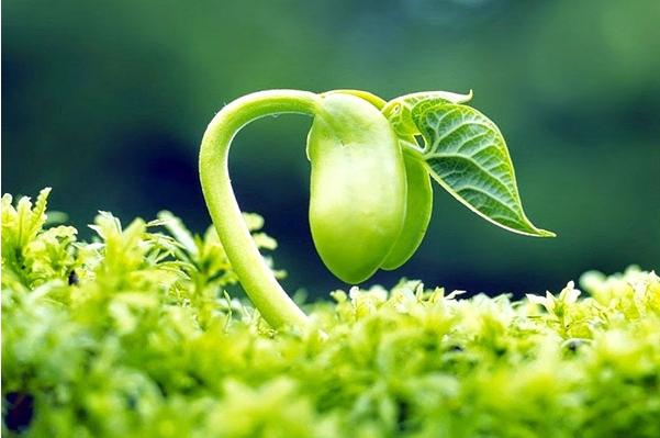 cách sử dụng mầm đậu nành hiệu quả, dùng mầm đậu nành đúng cách, dùng mầm đậu nành, dùng mầm đậu nành như thế nào, sử dụng mầm đậu nành như thế nào, sử dụng mầm đậu nành đúng cách, sử dụng mầm đậu nành, cách dùng mầm đậu nành, cách dùng mầm đậu nành hiệu quả, cách dùng bột mầm đậu nành, sử dụng bột mầm đậu nành đúng cách, sử dụng bột mầm đậu nành như thế nào, cách sử dụng mầm đậu nành, hướng dẫn sử dụng mầm đậu nành, cách sử dụng mầm đậu nành đúng cách, tác dụng và cách sử dụng mầm đậu nành, công dụng và cách sử dụng mầm đậu nành, cách sử dụng mầm đậu nành tự làm, cách sử dụng mầm đậu nành tốt nhất