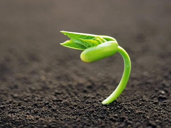 ăn mầm đậu nành tươi có tốt không, cách ăn mầm đậu nành tươi