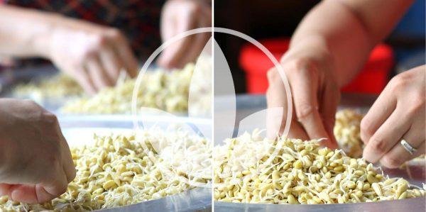 Review mầm đậu nành Fami có tốt không, bột mầm đậu nành fami, mầm đậu nành fami health, mầm đậu nành fami giá bao nhiêu, bột mầm đậu nành fami của công ty thảo mộc vàng, tinh chất mầm đậu nành Fami, bột mầm đậu nành cao cấp fami health, tinh chất mầm đậu nành fami có tốt không, mầm đậu nành cao cấp, mầm đậu nành thảo mộc vàng, tinh chất mầm đậu nành fami có tốt không, mầm đậu nành fami health – thảo mộc vàng, mua mầm đậu nành fami, tinh chất mầm đậu nành fami có tốt không, bột mầm đậu nành cao cấp fami health