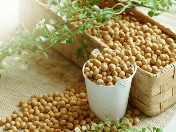 Cách làm bột mầm đậu nành, cách làm bột mầm đậu nành nguyên sơ, cách làm bột mầm đậu nành tăng vòng 1, cách làm mầm đậu nành giảm cân, cách làm bột mầm đậu xanh, cách làm mầm đậu nành nguyên xơ tại nhà, cách làm mầm đậu nành tăng vòng 1, cá cách làm bột mầm đậu nành tại nhà, cách làm bột mầm đậu nành khô, cách làm bột mầm đậu nành để uống, cách làm bột mầm đậu nành nguyên chất, cách làm bột mầm đậu nành chuẩn, ch sấy mầm đậu nành, cách làm mầm đậu nành uống tăng vòng 1, cách làm mầm đậu nành nguyên xơ tại nhà, cách làm bột mầm đậu nành nguyên xơ, cách làm bột đậu nành, cách chế biến mầm đậu nành,cách pha mầm đậu nành tăng vòng 1, mầm đậu nành tăng vòng 1 loại nào tốt, đã ai uống mầm đậu nành tăng vòng 1 chưa, cách sử dụng mầm đậu nành để tăng kích thước vòng 1, mầm đậu nành tăng vòng 1 webtretho, cách sử dụng viên mầm đậu nành tăng vòng 1, viên uống mầm đậu nành tăng vòng 1