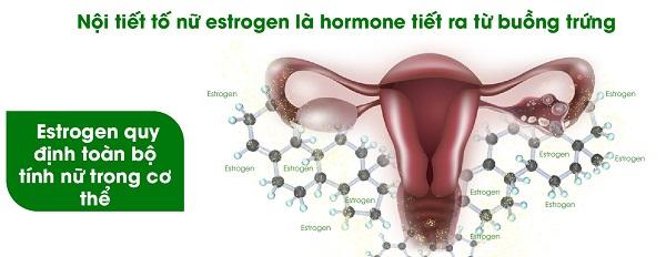 suy giảm nội tiết tố nữ là gì, suy giảm nội tiết tố nữ, suy giảm nội tiết tố, suy giảm nội tiết tố estrogen, bị suy giảm nội tiết tố nữ, suy giảm nội tiết tố là gì, suy giảm nội tiết tố nữ giới