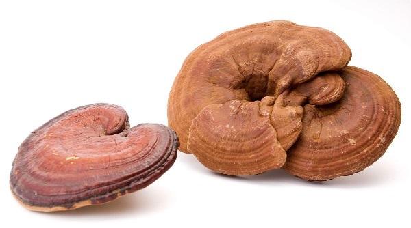 thành phần nấm linh chi